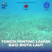 Fungsi Penting Lamun Bagi Biota Laut