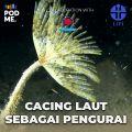 Cacing Laut Sebagai Pengurai | Ft. Joko Pamungkas
